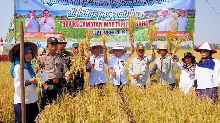 Meski Kemarau tapi di Kabupaten Banjar Sukses Panen Komoditas Padi Unggul Ini