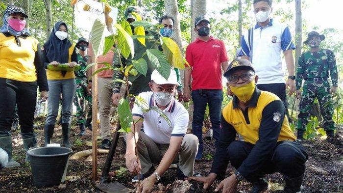 Penanaman Pohon Ulin Serentak se Kalsel, Pemkab Tanbu dan KPH Kusan Tanam 1.000 Bibit Ulin