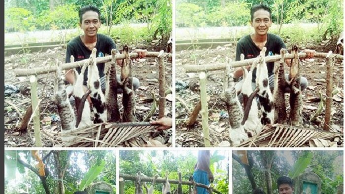 Kejam, Para Pemuda Bantai 5 Kucing Lalu Siap Dibakar untuk Dimakan, Netizen Pun Marah