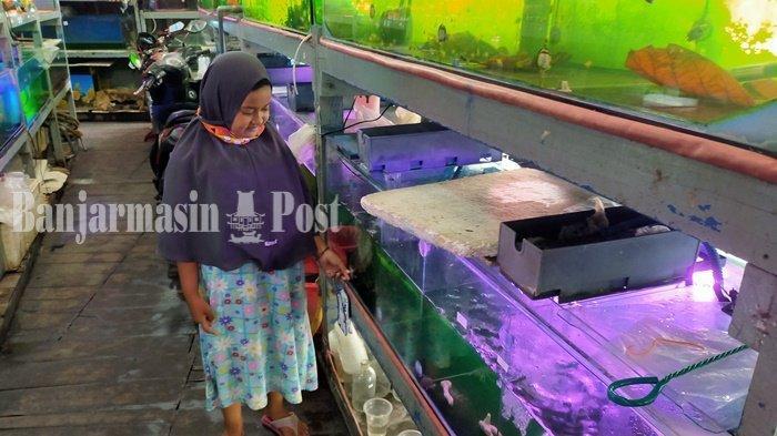 Bisnis Ikan Hias di Banjarmasin Ikut Terdampak Covid-19, Omset Turun 50 Persen