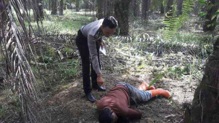 Satreskrim Polres Tanbu, Selidiki Kasus penemuan Mayat di Kebun Sawit