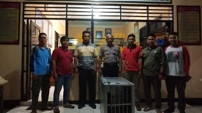 Uwa-uwa yang Ditemukan Polisi di Lokasi Penangkapan Pengedar Sabu, Dijemput BKSDA