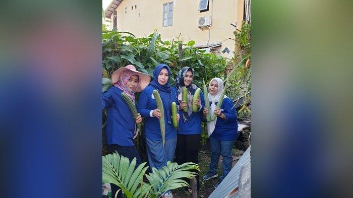 Wisata Kalsel, Bibit Tanaman di Kebun Agrowisata Polibag Banjarmasin Ini Belinya Via Online