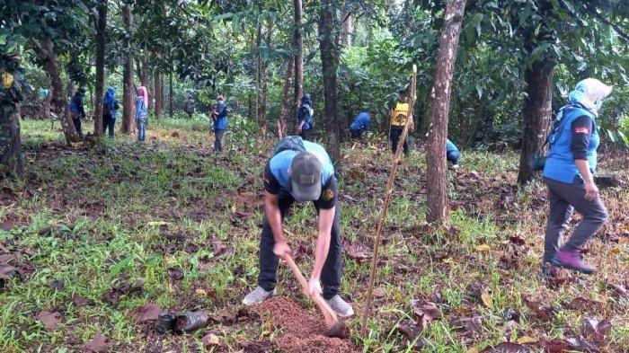 Hutan Jati Angsau Tanahlaut Jadi Tempat Edukasi Pohon Endemik Kalsel, Penanaman Ulin Diintensifkan