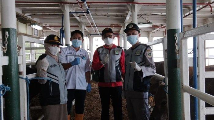 Idul Adha 2021, Sebanyak 3.424 Ekor Sapi Potong Penuhi Pasokan Permintaan Hewan Kurban di Kalsel