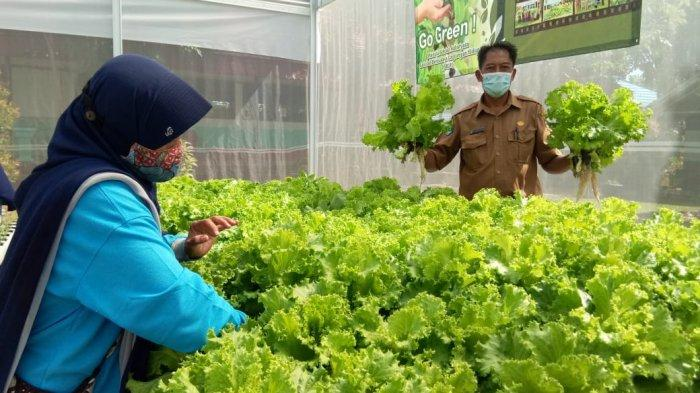 Pangsa Pasar Cerah, Bupati Tala Dorong Warganya Kembangkan Tanaman Hidroponik
