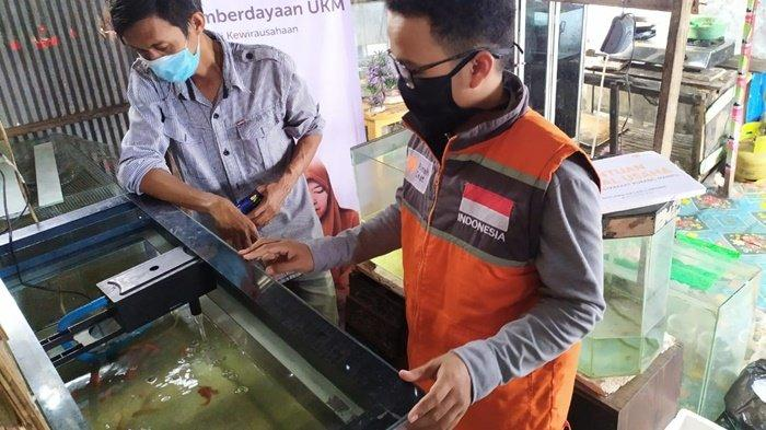 Jeli Lihat Peluang, Mitra Binaan Rumah Zakat Kalsel Usaha Jual Ikan Cupang