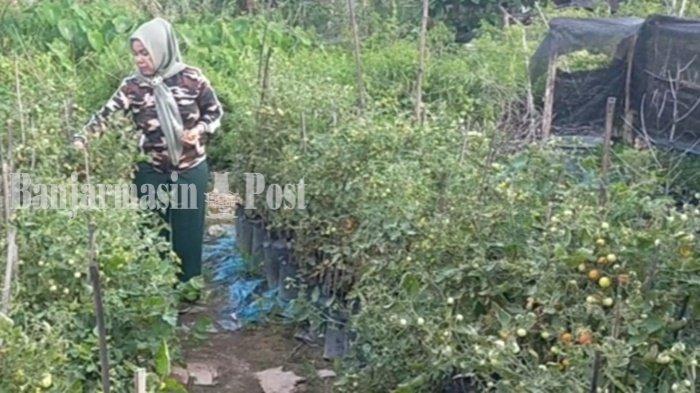 Wisata Kalsel, Berkebun Polybag Mulai Memasyarakat di Banjarmasin