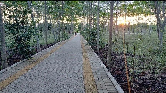 Berkunjung ke Taman Hutan Hujan Tropis, Nikmati Suasana Pepohonan Endemik Kalsel Seluas 90 Hektare