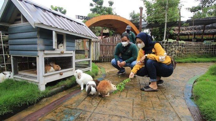 WEEKLY ANIMAL :Mengenal Jenis Kelinci di Amanah Borneo Park, Inilah Fungsi dari Rumah Kurcaci