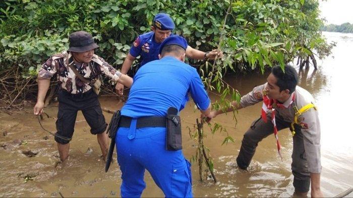 Jaga Ekosistem DAS Kapuas, Satpolair dan Pramuka Saka Bhayangkara Kapuas Tanam Mangrove
