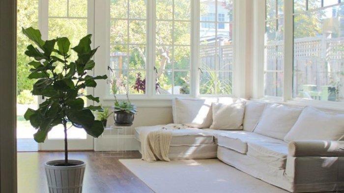 Tak Cuma Monstera Ini Daftar Tanaman Hias Indoor Yang Mudah Dirawat Segarkan Ruangan Banjarmasin Post