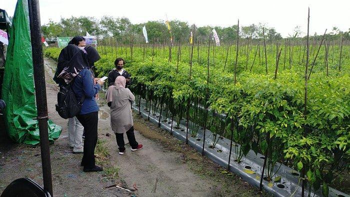 Petani di Sampit Kalteng Mengaku Terbantu Pemberian Modal dari Tengkulak