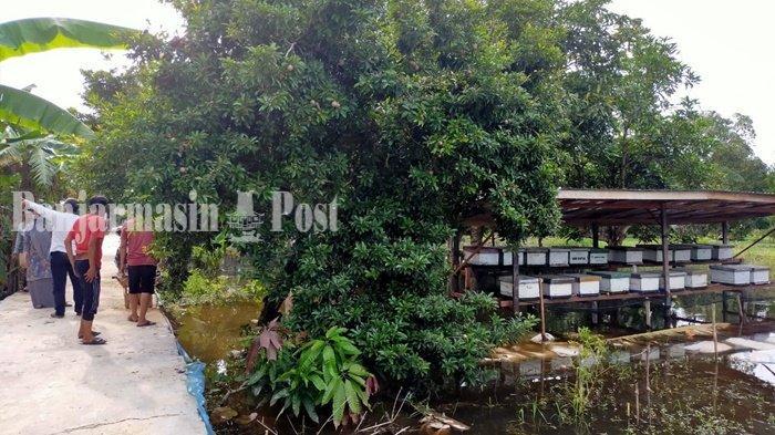 Budi Daya Lebah Madu Sungai Durait Hulu Dapat Dukungan dari Pemkab HSU