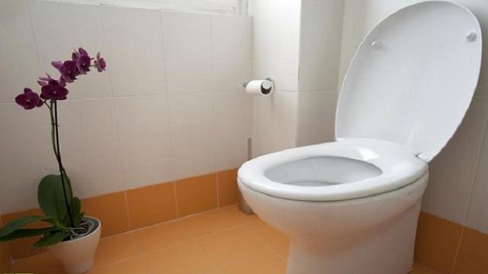 Jangan Letakkan Tisu Toilet di Atas Kloset Sebelum Mendudukinya, ini yang Akan Terjadi