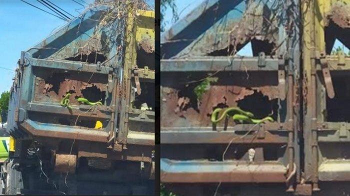 VIRAL Ular Hijau Bergelantungan di Bak Truk Sampah Jalan Raya Gresik, Bupati Gresik Bereaksi