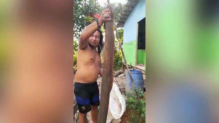 Warga Anjir Muara Temukan Ular Puraca Sebesar Termos, Diduga Pemakan Ikan di Kolam