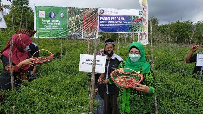 Respons Panen Cabai di Sampit, Wabup Kotim Berharap Pertanian Cabai Lebih Dikembangkan