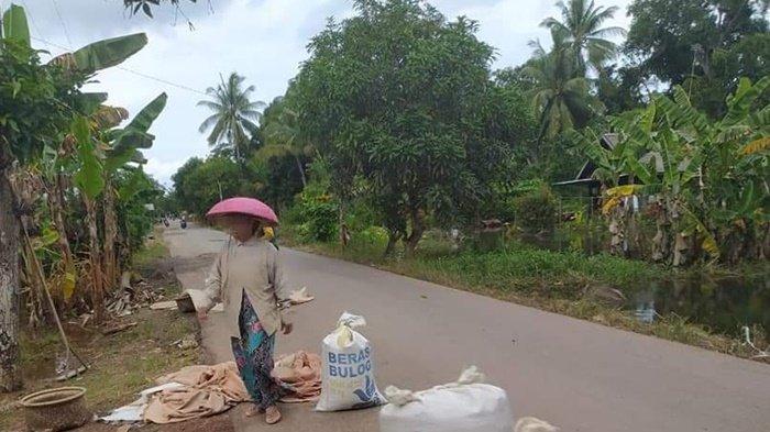 Banjir Telah Surut, Sebagian Petani Kurau Tanahlaut Mulai Semai Ulang Bibit Padi