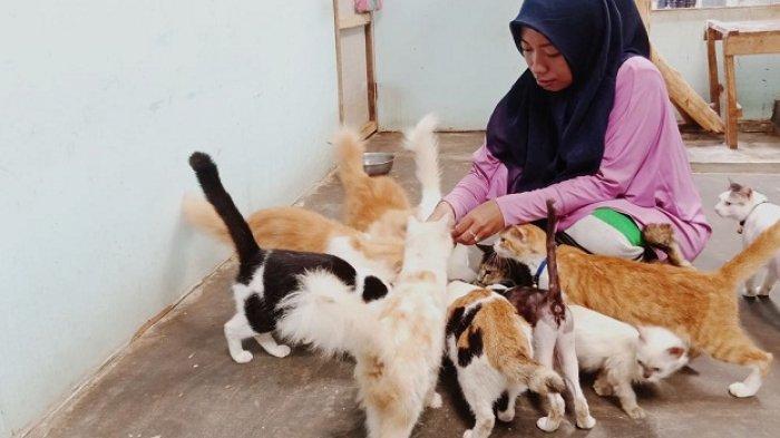 Tabrak Kucing, Warga Kotabaru Ini Mengubur Kucing dengan Baju yang Dipakainya Saat Itu