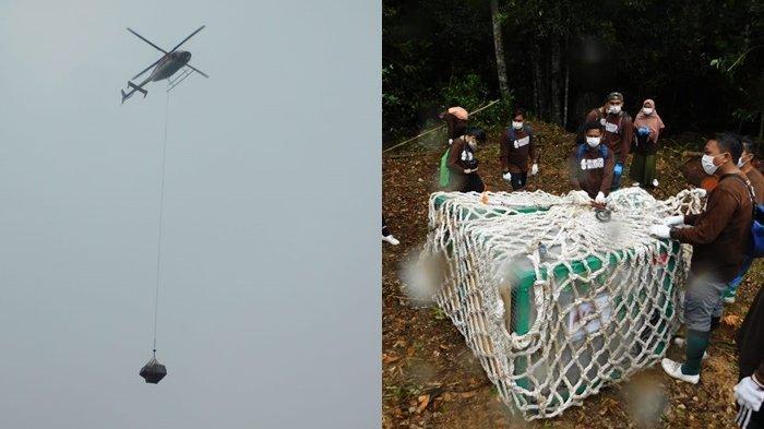 Dampak Covid-19, Setahun Yayasan BOS Tidak Melakukan Pelepasliaran Orangutan