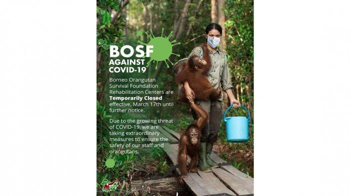 Dua Lokasi Pusat Rehabilitasi Orangutan Ditutup, Tidak Menerima Sukarelawan atau Peneliti Baru