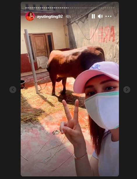 Postingan Ayu Ting Ting dengan sapi untuk kurban Idul Adha 2021