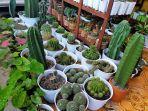 aneka-tanaman-kaktus1.jpg