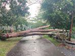 angin-kencang-di-kalsel-pohon-tumbang-di-marabahan-kabupaten-batola-sabtu-23102021.jpg
