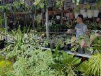 berbagai-jenis-tanaman-hias-di-kawasan-jalan-yos-soedarso-palangkaraya-kalteng-rabu-23122020.jpg