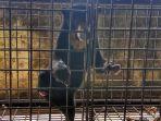 beruang-madu-di-balai-konservasi-sumber-daya-alam_20180426_095754.jpg