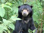 beruang-madu-jbg.jpg