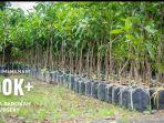 bibit-tanaman-di-artha-barokah-banjarbaru-kamis-1822021.jpg