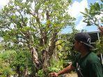 bonsai-tanaman-hias-kerdil-di-dalam-pot-rata-rata-punya-nilai-jual-tinggi.jpg