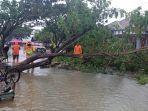 bpbd-tapin-pohon-tumbang-jenis-trambesi-menimpa-jalan-penghulu-di-kelurahan-ra.jpg
