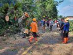 bpbd-tapin-pohon-tumbang-petugas-bpbd-kabupaten-tapin-dan-masyarakat-bergotong.jpg