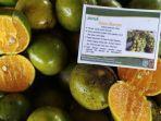 buah-jeruk-siam-banjar_wm.jpg