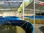 budi-daya-ikan-dengan-sistem-bioflok-di-kelurahan-guntung-payung-banjarbaru-08052021.jpg