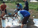 budi-daya-ikan-ponpes-babussalam-kabupaten-kapuas-kalteng-2892020-3.jpg