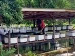 budi-daya-lebah-madu-di-desa-sungai-durait-hulu-babirik-kabupaten-hsu-kalsel-27012021-222.jpg