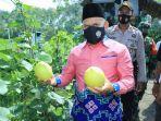 bupati-hsu-panen-melon.jpg