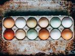 cangkang-telur-ayam-memiliki-warna-berbeda_20180219_225243.jpg