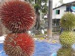 durian-merah-tapin_20180317_134549.jpg
