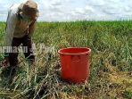 fadly-petani-desa-keramat-baru-kabupaten-banjar-kalsel-sawah-terendam-air-selasa-3112020.jpg