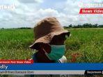 fadly-petani-desa-keramat-baru-kabupaten-banjar-provinsi-kalsel-selasa-3112020.jpg