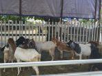 hewan-kambing-yang-dijual-di-daerah-jalan-antasan-kecil-barat.jpg