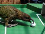 hewan-lucu-prediksi-laga-perempat-final-piala-dunia-2018_20180706_220323.jpg