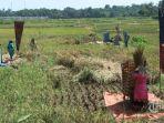 ilustrasi-petani-saat-memanen-padi-di-area-persawahan-desa-cibunar-s.jpg