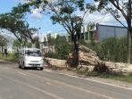 kayu-galam-di-tepi-jalan-di-lianganggang-banjarbaru-kalsel-senin-21062021.jpg