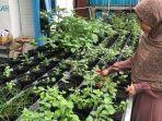 kebun-herbby-fresh-banjarmasin-kembangkan-jenis-edible-flower.jpg